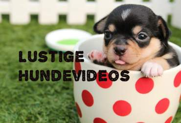 Funny Dog Videos: The best clips